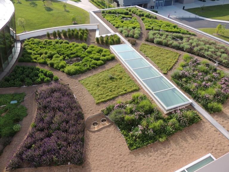 NKU Green Roof with Zero Company