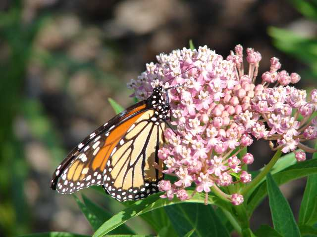 Adding Native Plants to Your Landscape