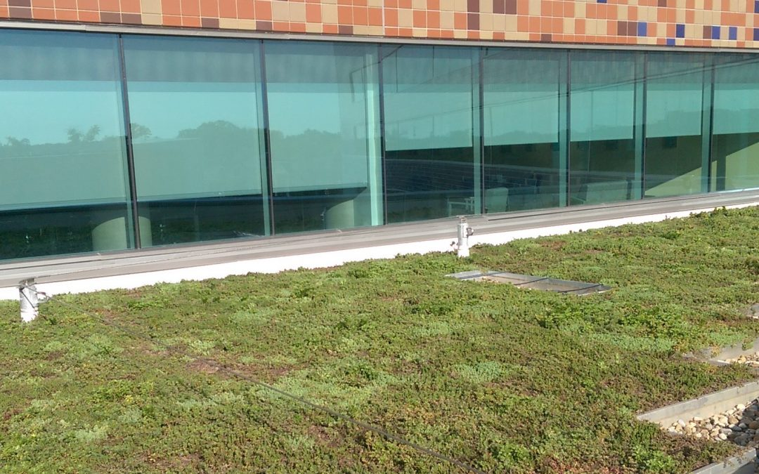 Are your windows killing your landscape?